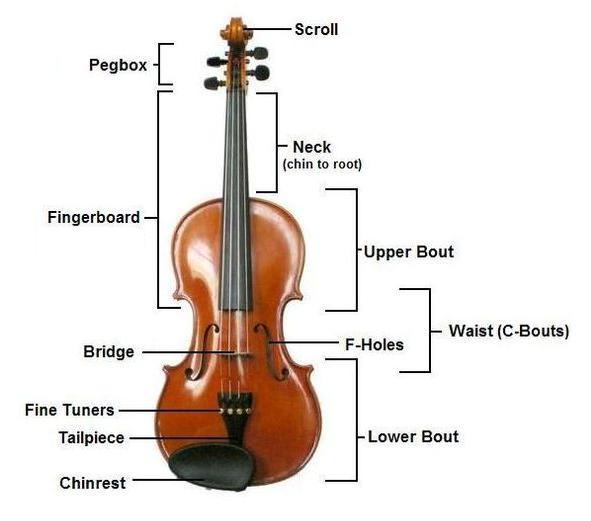 cấu tạo đàn violon