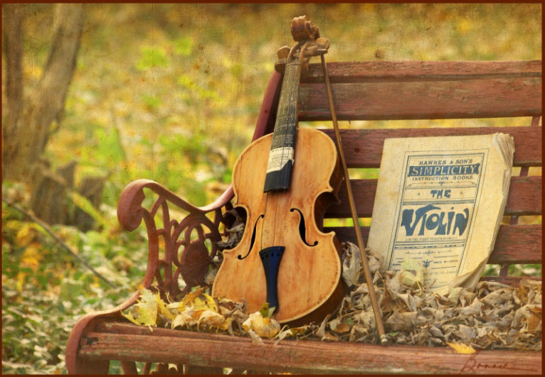 tự học đàn vi ô lông