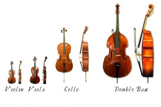 các loại đàn họ violin